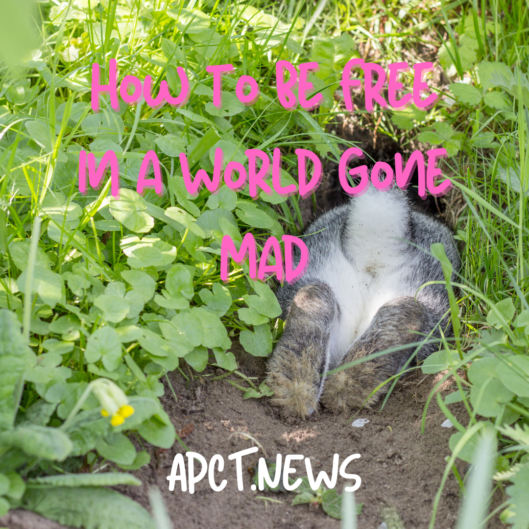 How to Be Free in a World Gone Mad, Part One: Rabbit Holes